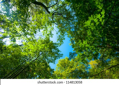 Lush green foliage, birch trees and clear sky in the forest in autumn
