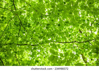 Lush green foliage in the forest in spring