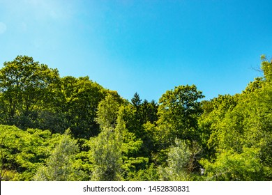 lush green foliage of treetops under the bright blue summer sky