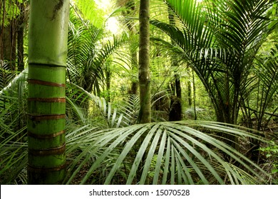 Lush green foliage in tropical forest