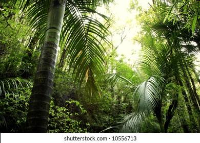 Lush green foliage in tropical rain forest