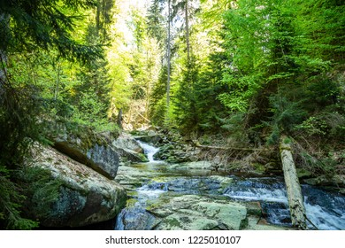 Lush green forests are perfect for Hiking in the Harz national Park is a