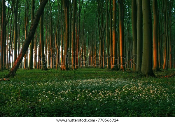 Lush Green Forrest in Sunset