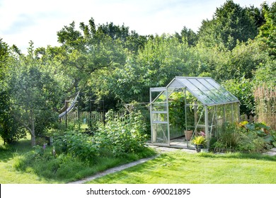 Lush green garden with big old plum tree and greenhouse