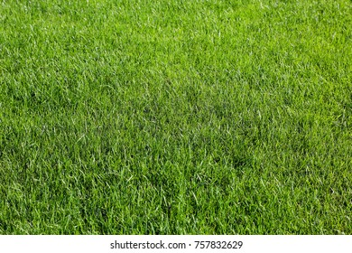 lush green grass on a city lawn
