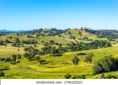 Lush green hills of Bega region in NSW, Australia, well known for its cheese