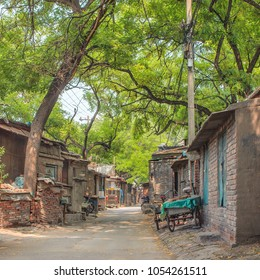 Lush green hutong (ancient alley) in Beijing, China