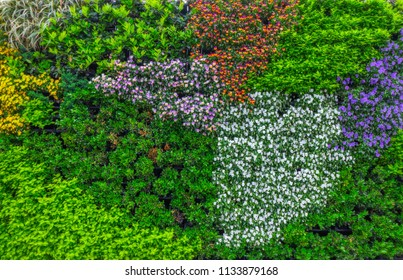 lush green leaves with colorful flowers vertical plant garden background backdrop