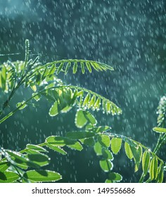 Lush green leaves with falling drops