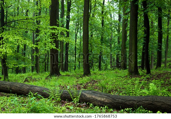 Lush green mixed forest after the rain