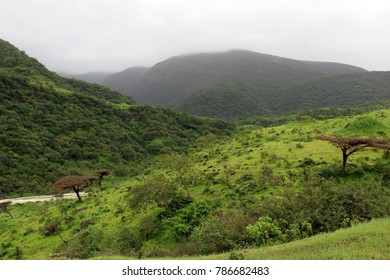 Lush green mountain landscape in Ayn Khor tourist resort, Salalah, Oman