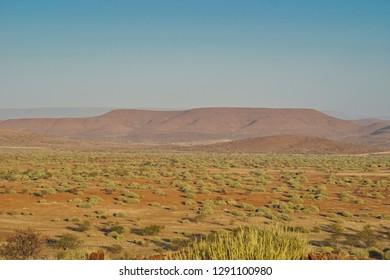 Lush, green Palmwag oasis, with makulwani palms and euphorbia bushes set amid the arid rocky scrub of Damaraland. Namibia, Africa.