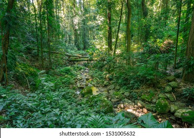 Lush green rainforest landscape with green trees and plants. Biodiversity and ecology nature background