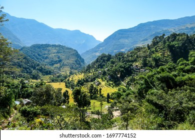 Lush green rice paddies along Annapurna Circuit Trek, Nepal. The rice paddies are located in the Himalayan valley. Lots of trees growing in between. High Mountains in the back. Clear and bright day.