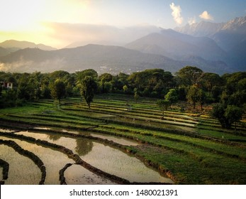 Lush green rice paddy fields in monsoon in the small Indian village of Sidhpur, near Dharamsala and at the base of the Dhauladhar ranges in the Himalayan foothills, Himachal Pradesh, India