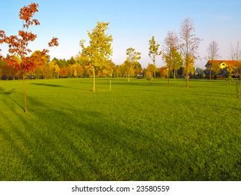 A lush, green, sunny park