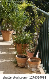 Lush green terrace with palms and other plants in terracotta pots wine barrel in Mallorca, Spain