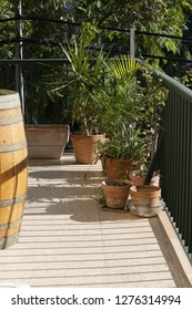 Lush green terrace with wine barrel palms and other plants in terracotta pots wine barrel in Mallorca, Spain
