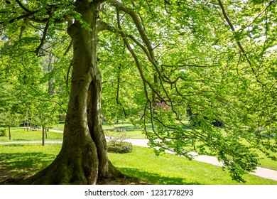 Lush green trees stand in the Park
