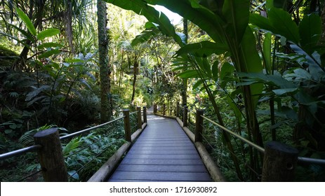 Lush green tropical rainforest background - Big Island, Hawaii (USA).