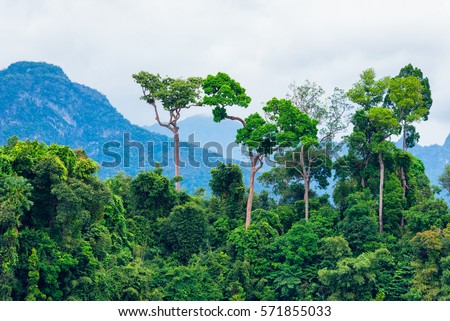 lush green tropical rainforest background mountain stock photo edit