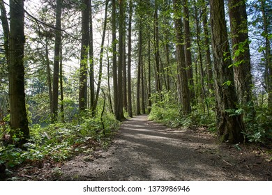 Lush green wooded landscape in a Pacific temperate rainforest in Oregon on a sunny spring day.