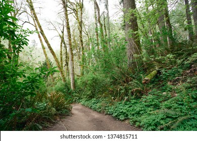 Lush green wooded landscape in a Pacific temperate rainforest in Oregon.