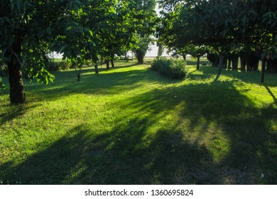 Lush green yard with sunlight passing through trees