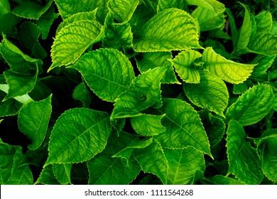 Lush greenery foliage closeup. Top view.
