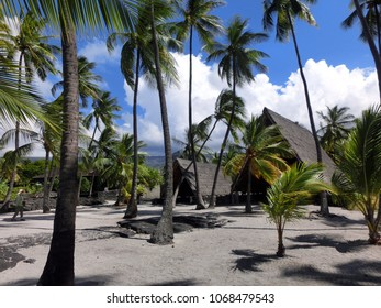 Lush Hawaiian palm tree landscape