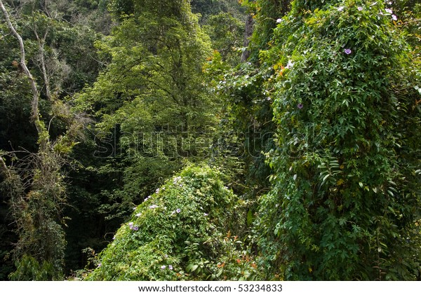 Lush Jungle Foliage Stock Photo (Edit Now) 53234833