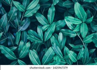 lush leaves, nature background, dark blue toned