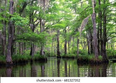 Lush Louisiana bayou