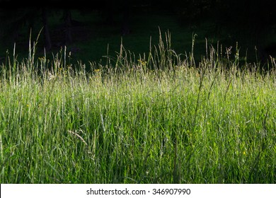 A lush meadow with a dark background.