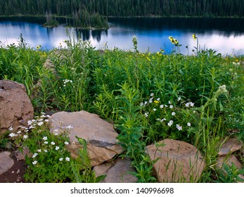 Lush meadow overlooking lake at the bottom of a hill, Grand Mesa, Colorado