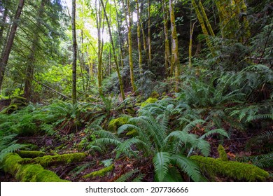 A lush moss covered forest in the state of Washington