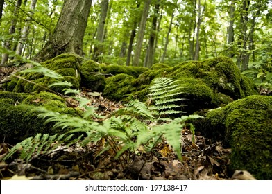 Lush moss and ferns cover the forest floor.