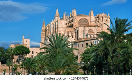 Lush palm trees and Cathedral of Palma de Mallorca against blue sky, building was built on a cliff rising out of the sea. Majorca, Balearic Islands, Spain