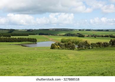 Lush pasture in farmland, Southern Victoria, Australia