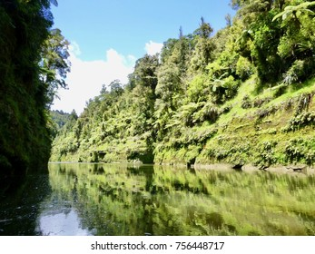 Lush Plants along the Green Canyon in the Whanganui River New Zealand