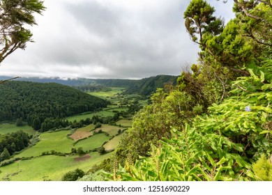 Lush plants on the rim of the Sete Cidades caldera in the Azores island of Sao Miguel.
