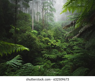 Lush rain forest with morning fog