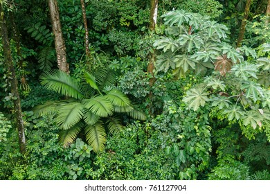Lush rainforest canopy view at La Fortuna Costa Rica