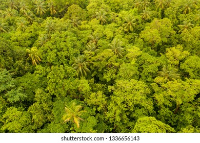 Lush rainforest grows on the island of New Britain in Papua New Guinea shows. This remote tropical area is part of the Coral Triangle due to its high marine biodiversity.