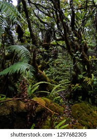 A lush rainforest in Molokai