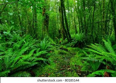 lush rainforest path