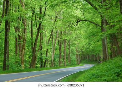 Lush spring green trees and vegetation make for a beautiful scene along a road at Great Smoky Mountains National Park in Tennessee.