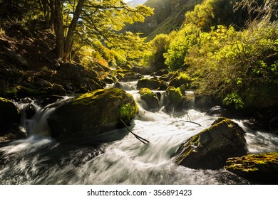 lush stream in green forest