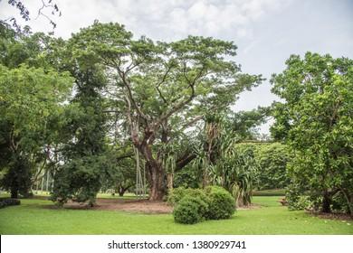 Lush tropical flora along footpath at the George Brown Botanic Gardens in Darwin, Australia