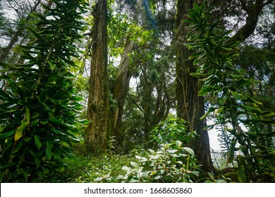 Lush tropical forest, with large trees